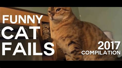 funny cat fails compilation  youtube