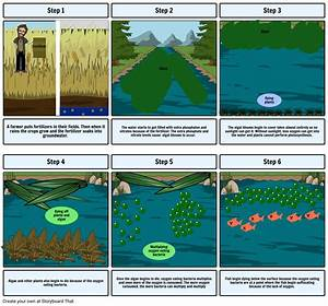 Eutrophication Comic By  Kaitlyn Miller Storyboard