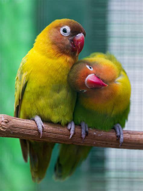lovebirds dos  donts pettlr
