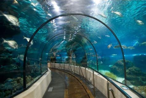 aquarium la rochelle prix aquarium la rochelle a la une zoo aquarium en nouvelle aquitaine proxifun