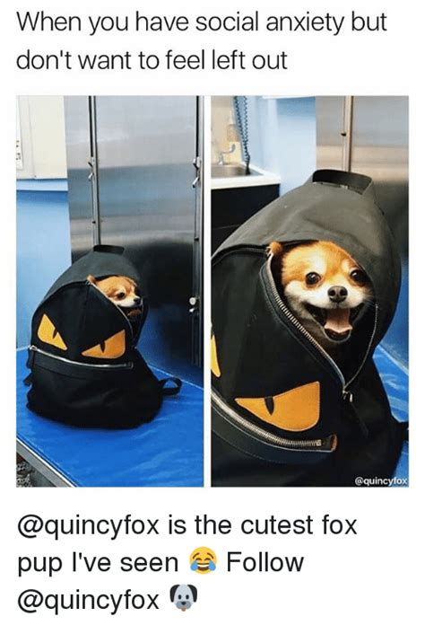 Social Anxiety Memes - when you have social anxiety but don t want to feel left out is the cutest fox pup i ve seen