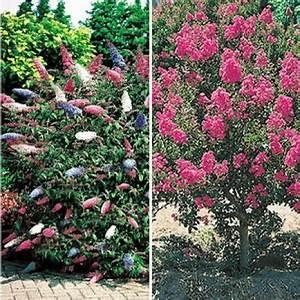 Schnell Wachsende Büsche : schnellwachsende b ume und str ucher rasante schattenspender garten pflanzen pflanzen und ~ A.2002-acura-tl-radio.info Haus und Dekorationen