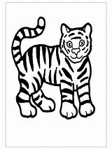 Tiger Printable Preschool Pages Coloring Kindergarten Crafts Tigers Printables Sheet Jungle Letter Preschoolcrafts Rainforest Animals sketch template