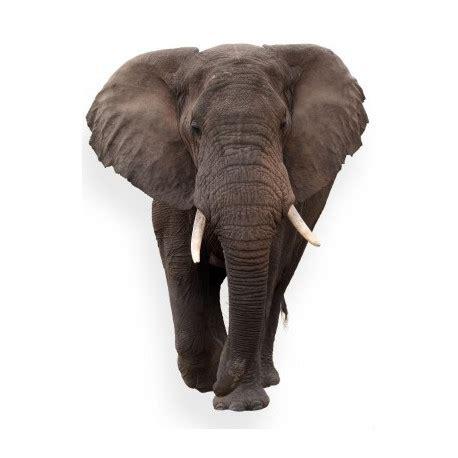 sticker mural elephant de face univers savane jungle