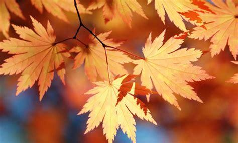 Conserver Les Feuilles D'automne  La Pause Jardin