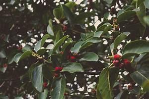 Baum Mit Roten Beeren : baum mit leuchtend roten beeren download der kostenlosen fotos ~ Markanthonyermac.com Haus und Dekorationen