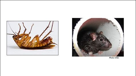 dead rats roaches   tampa va hospital pct pest