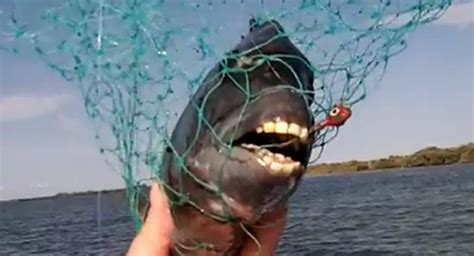 You Ve Seen Dog With A Human Face Now Meet The Fish With