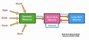 aqa, a, level, psychology, memory, revision