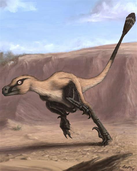 dinosaur exquisite raptor