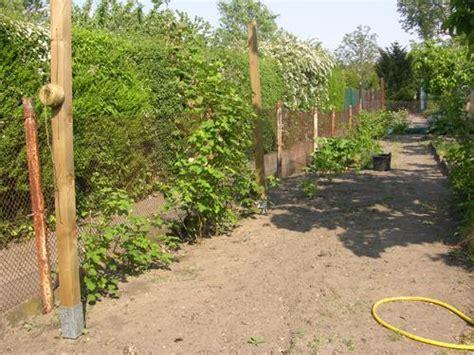Brombeeren Garten Todaymodels77overblogcom