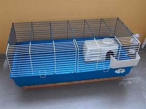 Cage A Cochon D Inde : le cochon d 39 inde un animal parfait pour les enfants ~ Dallasstarsshop.com Idées de Décoration