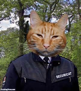 cat guard security guard cat pictures