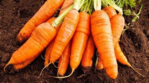 Knackiges Gemüse Aus Dem Garten