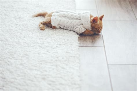 3 pet friendly flooring options illinado llc