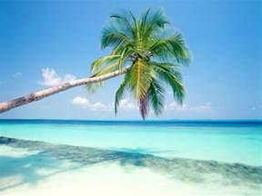free tropical beach with palm tree computer desktop wallpaper