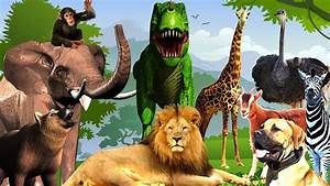 Animal Sounds Video For Kids To Learn Wild Animals Names ...