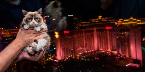 Grumpy Cat Visits Las Vegas For Her New Book Launch