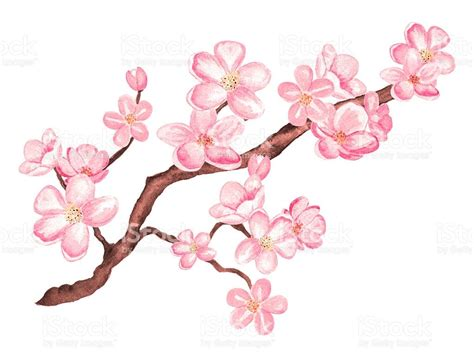 watercolor branch blossom sakura cherry tree with flowers