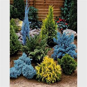 Japanische Pflanzen Winterhart : japanische pflanzen kaufen japanische pflanzen winterhart ~ Michelbontemps.com Haus und Dekorationen