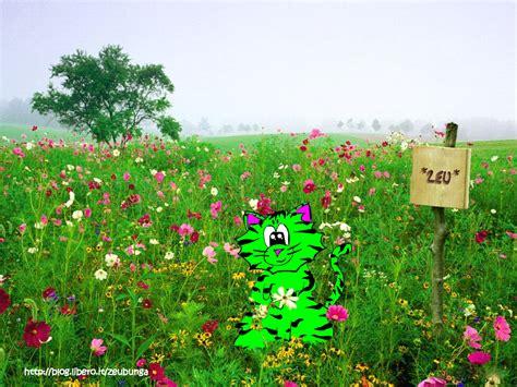 prato fiorito windows 7 pin sfondo desktop prato fiorito di cagna paesaggi20