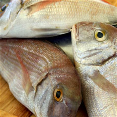 fish  mercury