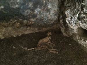 Arizona Man Releases 'Chupacabras' Pictures | Paranormalis
