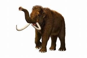 Woolly Mammoth Extinct Animals