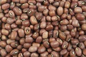 mung bean cooking wiki