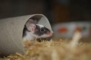 Comment Tuer Une Souris : voici comment se d barrasser des souris sans les tuer ~ Maxctalentgroup.com Avis de Voitures