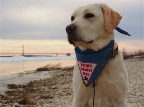 leader dogs for the blind leader dogs for the blind provides guide dogs to those in