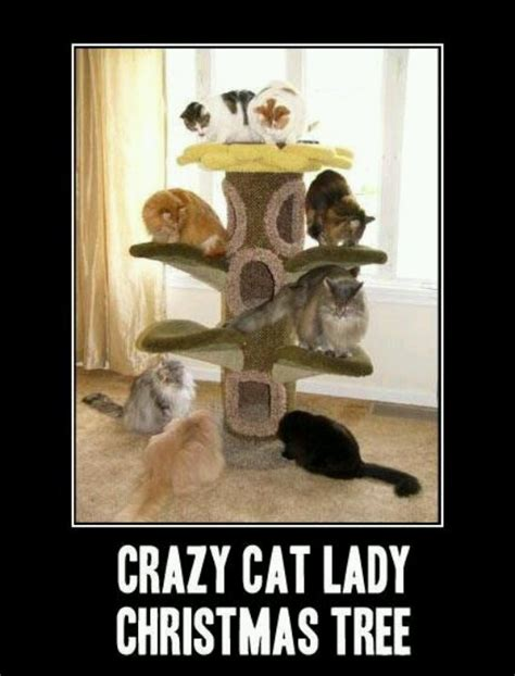 Crazy Cat Lady Meme - 53 best images about cats on pinterest cats tuxedo cats and cats humor