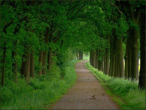 fotos bosques magicos de todo el mundo imagenes en