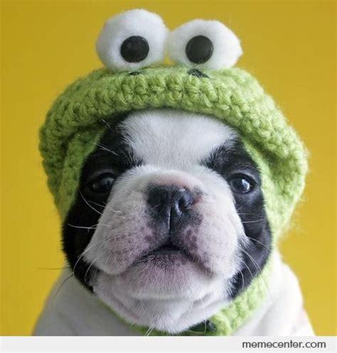 dog   frog hat  ben meme center