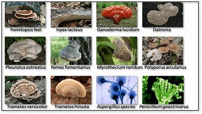 Fungi Types Which Adsorption Dye Study Diagram