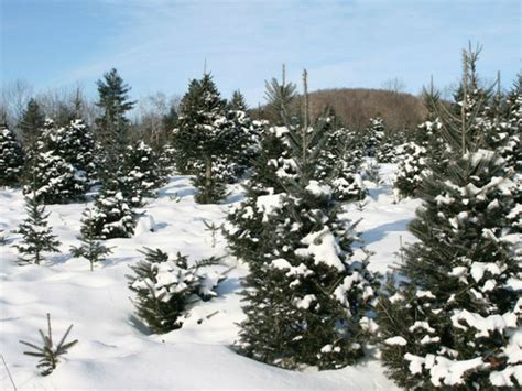 permits on sale to cut christmas trees at lake tahoe