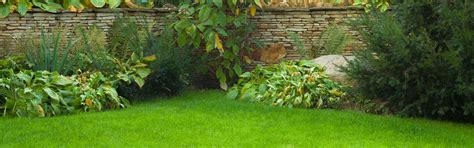 moos steinen entfernen moos auf steinen entfernen unkraut und moos aus
