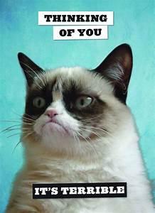 Booktopia - Grumpy Cat Postcard Book by Grumpy Cat ...