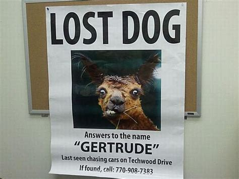 Lost Dog Meme - 20 funny lost and found pet posters