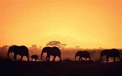 Wallpapers Afrika Africa Desktop