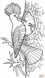 Coloring Hoopoe Pages Printable Bird Drawing Supercoloring Colouring Super Books Adult Birdhouse Sheets Dot Paper Visit sketch template