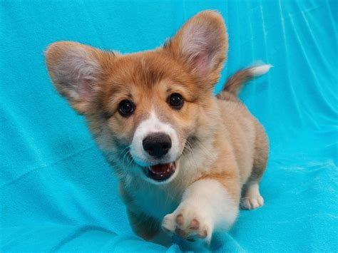 puppy pictures searching for the perfect puppy thedogtrainingsecret com