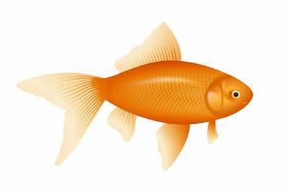 Clipart Goldfish Clip Domain Advertisement