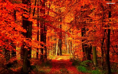 meaning  symbolism   word autumn