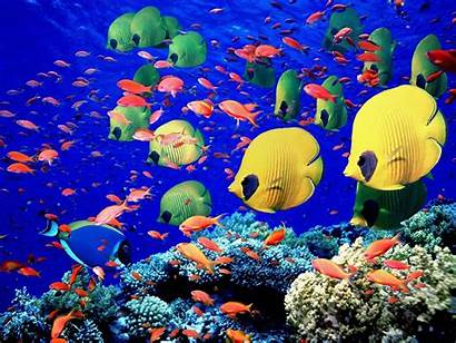 Colorful Fishes Animals Wallpapers Fish Under Creatures
