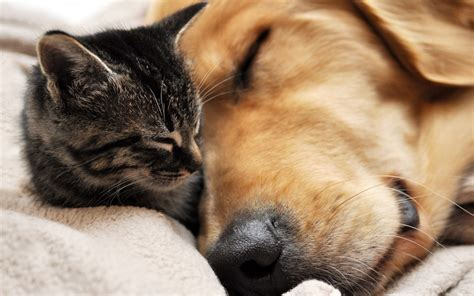 These 12 Cute Dog And Cat Pictures Will Make Your Heart