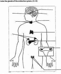 Flashcards - Chemical Regulation Human Endocrine System ...