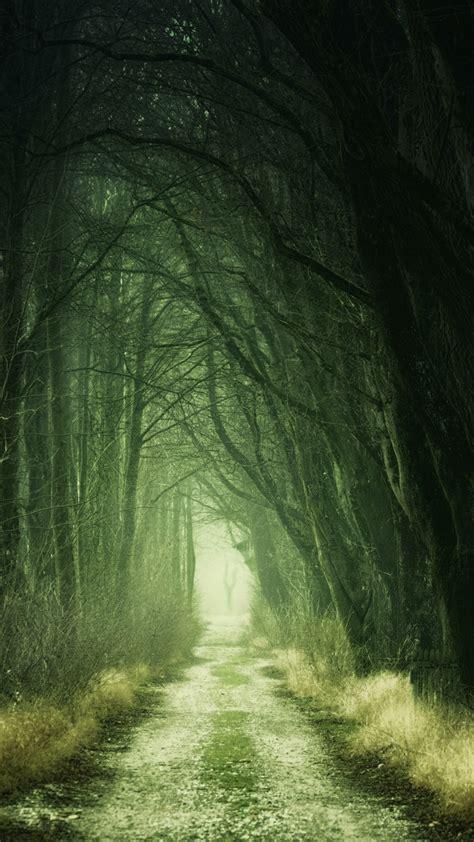 Forest 4K Wallpaper Path Fall Calm Green 5K Nature #524