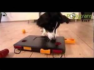 Video Pour Chien : jeux educatifs dog activity pour chien chez polytrans youtube ~ Medecine-chirurgie-esthetiques.com Avis de Voitures