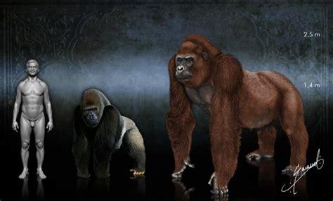 Prehistoric Ape Gigantopithecus Skeleton